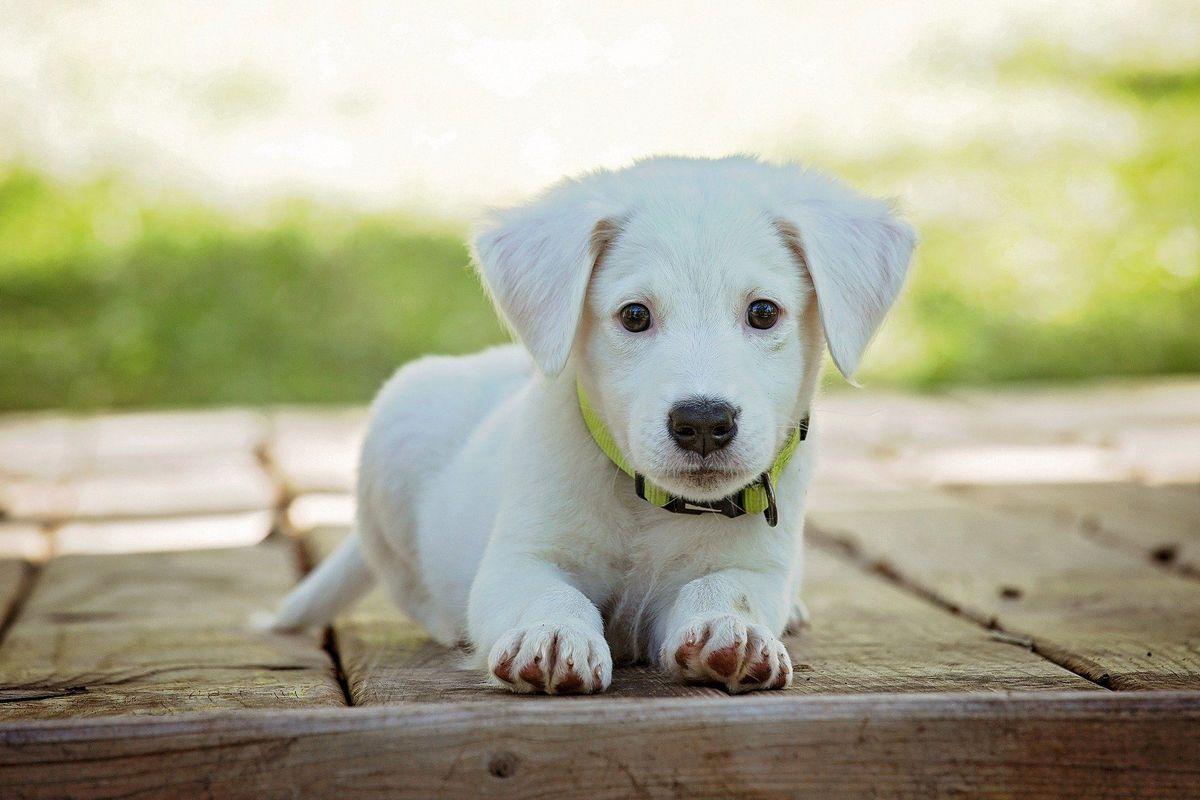Прецедент: суд Бразилії вперше визнав право собак на компенсацію моральної шкоди